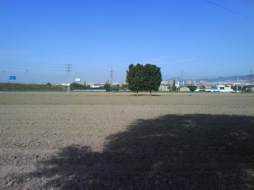 Els camps de cultiu del Parc de la Marina