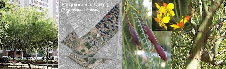 parquinsonia